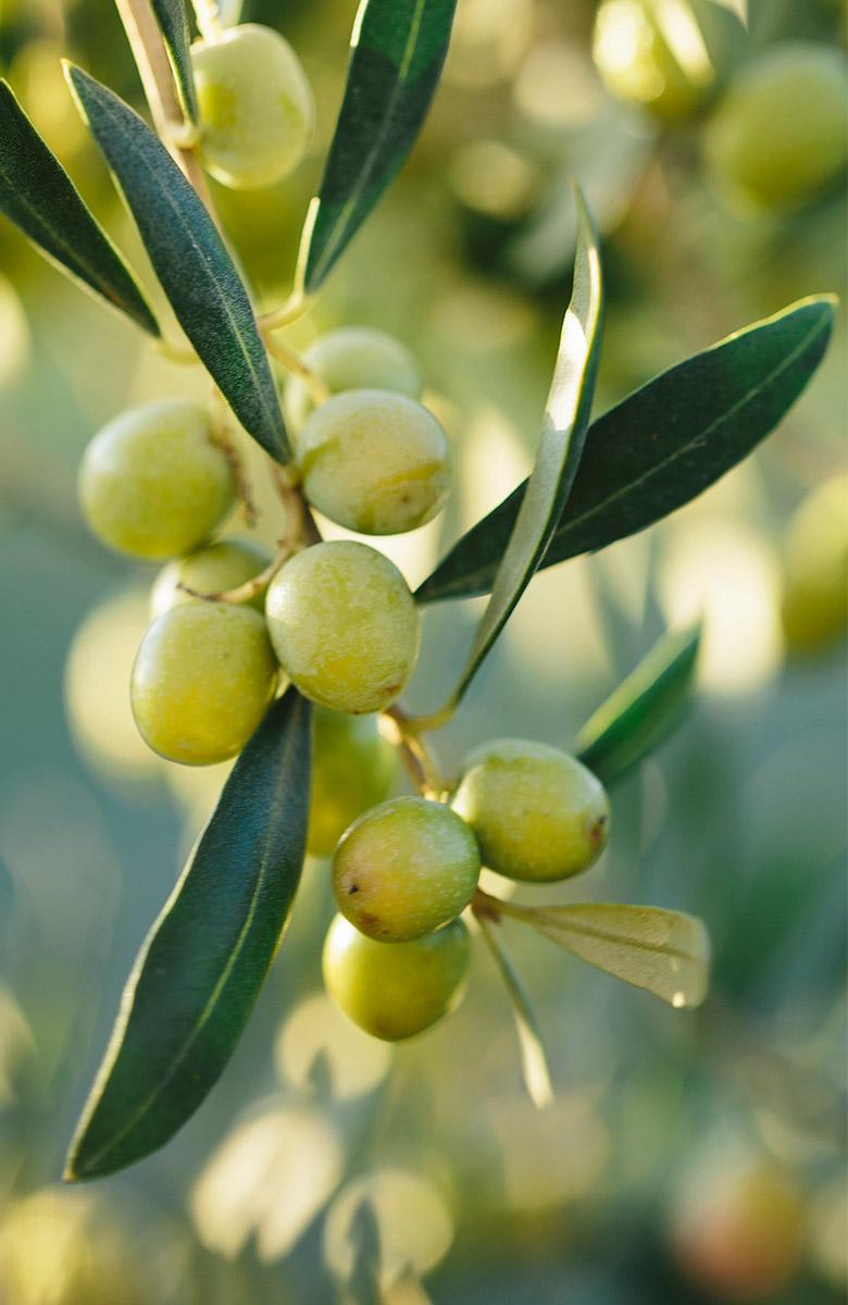 olives ecològiques